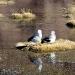 Birds nest in a salt lagoon