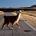 ...and more Lamas around :)