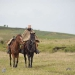 The landscape is great, lamas, horses and cows walking around peacefully with a Gaucho occasionally riding by