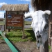 Arriving at the Cotopaxi nationalpark
