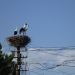 ...and in the villages one stork nest next to the other..