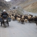 Now its sheeps that block the way, but it never takes long :)