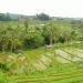 Rice terraces at Jataluwih (a Unesco heritage site)